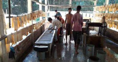 রাবারের দর পতন : বান্দরবানে হাজারো শ্রমিক বেকারের আশঙ্কা